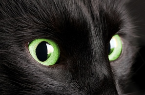 Black Cat closeup